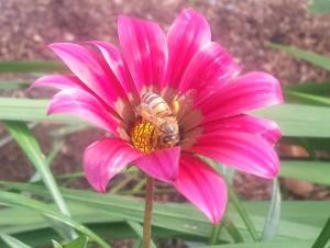 BeeFlowerSmall